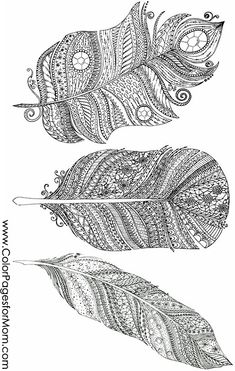 feather coloring page 8
