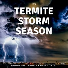 It's severe storm season here in the River Valley. Another storm you may not be aware of is termite season. Although these guys are tiny, they are mighty because they can cause some major damage to your home. Termite Pest Control, Severe Storms, Seasons, River, Guys, Blog, Seasons Of The Year, Rivers, Blogging