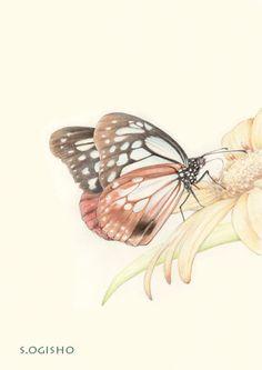 アサギマダラ Pictures Of Insects, Pictures To Draw, Colored Pencils, Moth, The Creator, It Works, Dragonflies, Drawings, Illustration