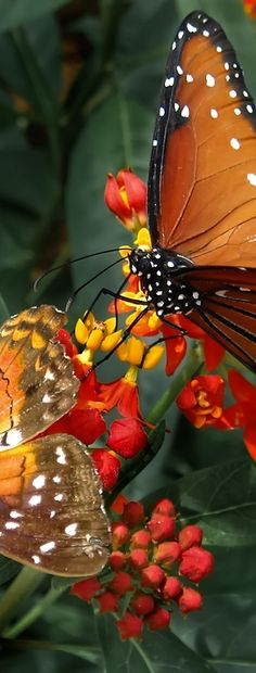 Butterflies on Flowers - Great Photo