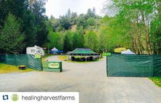 """#Repost @healingharvestfarms:  """"Getting all set up for tomorrow..."""" 11am-5pm. See everyone tomorrow in Laytonville!  We'll be there at the Dos Perros Family/Blue Belly Farms booth!  @dosperrosfamily @sho.da.love @calidepfest  @emeraldalchemy @ranchorelaxoorganics @swamiselect @3rd_gen_familyfarms @mtg_seeds @twanmtg @absolutextracts @carebydesign @coastalseeds @thehighestgrade @tcinmendo @happydayfarms @emeraldpharms_ig @hummingbirdlaneallnatural @bogseeds @kind_solutions…"""