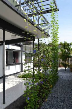 Steel cables for creepers, Garden House / Tetawowe Atelier