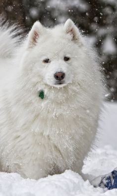 Download Wallpaper 480x800 Dog, White, Snow, Winter HTC, Samsung Galaxy S2/2, Ace 480x800 HD Background