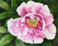 pink tree peony watercolor archival print 8 x 10 by carolsapp