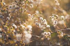 Love the light, depth of field and soft tones in this beautiful photo from @Rebecca Nichols of Bumbles & Light.