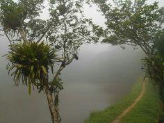 Boaçu Serra da Aratanha Pacatuba-Ce, Foto: Franklin Maia