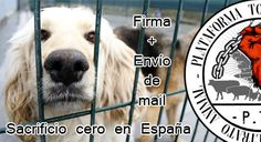 no-kill policy in all dogpounds in Spain