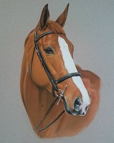 """""""Mi piace"""": 12, commenti: 2 - Lindsay Hill (@lindsay_hill_artist) su Instagram: """"Latest portrait painted.#horses #equineartist #equineportraits #love my job!!"""""""