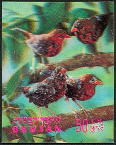 Red Avadavat stamps - mainly images - gallery format