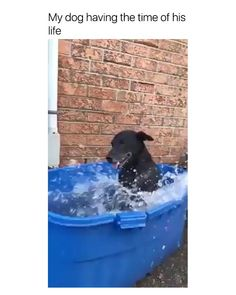 The cutest thing I've seen this week - Cutest Baby Animals Cute Funny Dogs, Cute Funny Animals, Adorable Dogs, Awesome Dogs, Funny Cats, Funny Animal Jokes, Funny Animal Pictures, Animals Crossing, Funny Dog Videos