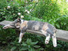 Lazy Day Cat | Content in a Cottage