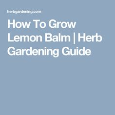 How To Grow Lemon Balm | Herb Gardening Guide