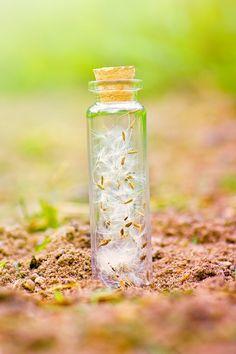 Dandelion seeds by Pamba on DeviantArt