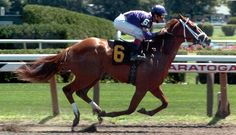 Ride a race horse !