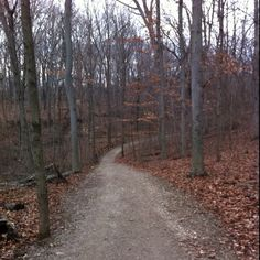 Trail run- new favorite way to work out!