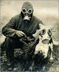 WWII Dog in a Gas Mask