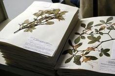 National Arboretum - 02-23-10 - Herbarium (2)
