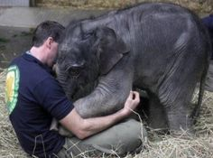 Ever hugged a baby elephant? by jasminereeves28