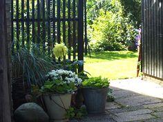 HavePlaner og PlanteBegejstring: NY INDGANG TIL DEN PRIVATE HAVE - SÅ KOM DET SORTE HEGN