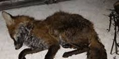 Petition: End the brutal trapping of wildlife