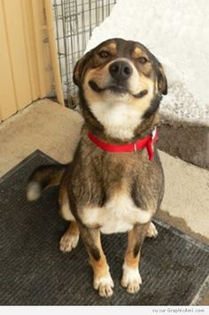 Un chien nous apprend à avoir la banane ! Et nous fait un beau sourir :-)