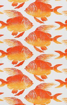 orange.quenalbertini: Orange fishes, coquita