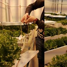 Gardening, Instagram Posts, Lawn And Garden, Horticulture