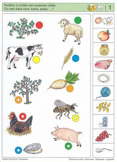 Visual Perception Activities, Brain Activities, Montessori Activities, Classroom Activities, Toddler Activities, Dinosaurs Preschool, Preschool Math, Teaching Kindergarten, Kindergarten Worksheets