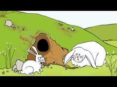 Animation, Sminky Shorts: Fat Rabbit  LOL