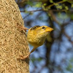 Bird picture gallery by Mukesh Garg's unlimited focus on bird and wildlife photography