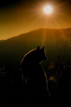 Howl on 500px by Bogdan Merlusca, Bucuresti, Romania ☀ NIKON D5100-f/11-1/750s-86mm-iso100, 3264✱4928px-rating:98.2