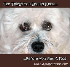10 Things You Should Know Before You Get a Dog.  Photo by Amy Peterson. Graphic by Brenda Sayles.