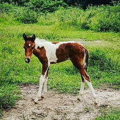 Florecita #boliviantours Bolivia, Horses, Amazing, Animals, Animales, Animaux, Horse, Animal Memes, Animal