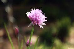 Photographe : Sadana Silhol Plants, Gardens, Photography, Plant, Planting, Planets