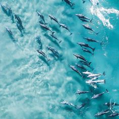 When your dolphin squad is on point📷🌴 . Did you know that Bottlenose dolphins are mammals and can swim up to 260 metres below the surface of the ocean Aaron Lear, Mermaid waters, QLD . Orcas, Ocean Photography, Aerial Photography, Bottlenose Dolphin, Amazing Adventures, Gold Coast, Dolphins, Mammals, Wilderness