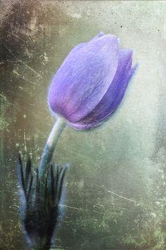 Springtime Message by Csilla Zelko on 500px