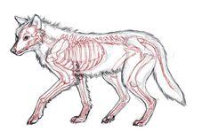 wolf paws draw - Buscar con Google