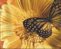 Related image Cooking Recipes, Butterfly, Flowers, Image, Chef Recipes, Royal Icing Flowers, Butterflies, Flower