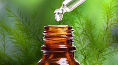 There are a myriad of tea tree oil benefits in today's society. Tea tree oil is a necessity in one's arsenal of natural medicinal products. Buy Essential Oils, Tea Tree Essential Oil, Pimples On Lip Line, Natural Remedies, Home Remedies, Tea Tree Oil Uses, Smoothies, Endocannabinoid System, How To Make Oil