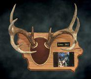 Iowa Plaque Deer Antlers Diy Diy Antlers Deer Mounts