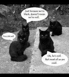 Maybe just a little evil... but mostly cool... #blackcats