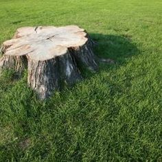 A mix of Epsom salts and water can effectively kill off unwanted tree stumps.