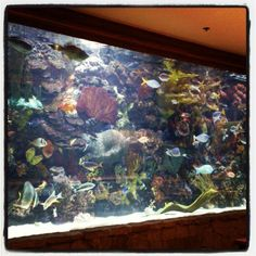 Cool Fish Tanks | Cool fish tank.... checkout the green eel.. | Flickr - Photo Sharing!