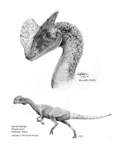 Dilophosaurus natural prey was popcorn so they had a scoop for it on their head science doesnt lie.