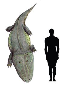"Prehistoric taxonomy | Paracyclotosaurus davidi (""near wheeled lizard"")..."
