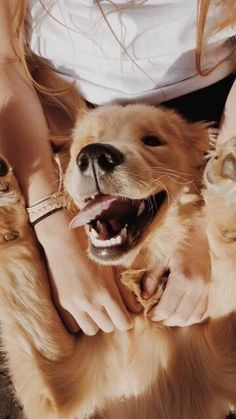History testifies that dogs have always been humans' best friends. Getting your dog's trust goes much beyond Cute Baby Dogs, Cute Dogs And Puppies, I Love Dogs, Cute Babies, Doggies, Cute Animal Pictures, Dog Pictures, Animals And Pets, Funny Animals
