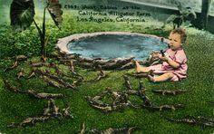 http://www.image-archeology.com/Just_Babies_at_the_California_Alligator_Farm_Los_Angeles_California_2949.jpg