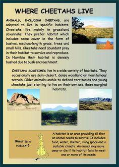 Cheetah Habitat Project For Kids