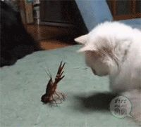 Cat vs crawfish  (GIFAnime)