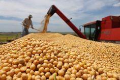 El campo pide que se vuelvan a bajar las retenciones a la soja